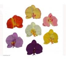 Цветок орхидеи.