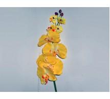 Ветка орхидеи (цвет-ассорти)